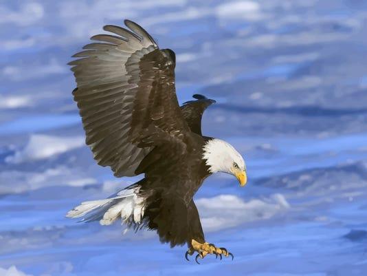 635821655334306535-FreeVector-Flying-Bald-Eagle-Vector