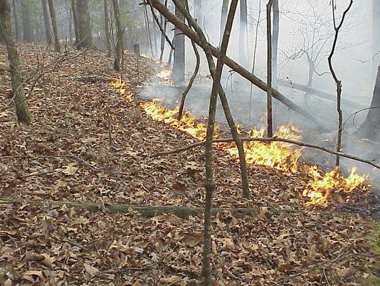 Forest Fire 0721.jpg
