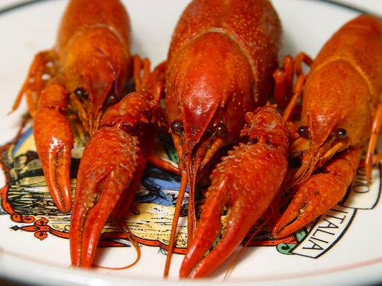 Find crawdads in Sylva this month.