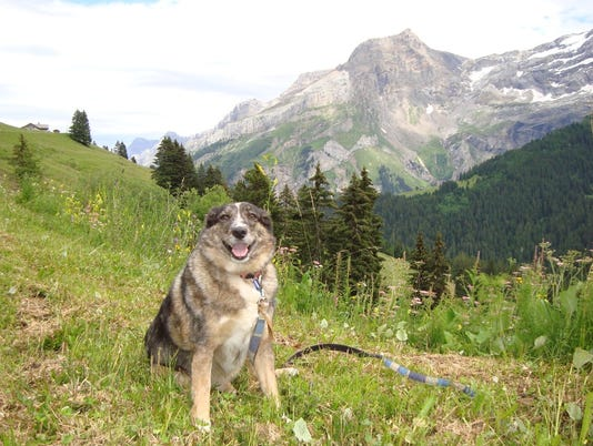 Lynx-in-Swiss-Alps.JPG