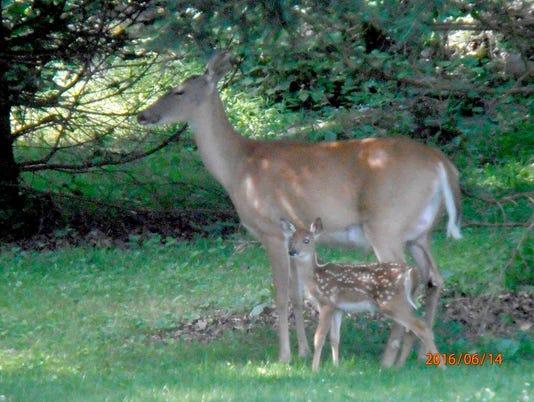 HES-SUB-061616-Heller-Deer.jpg