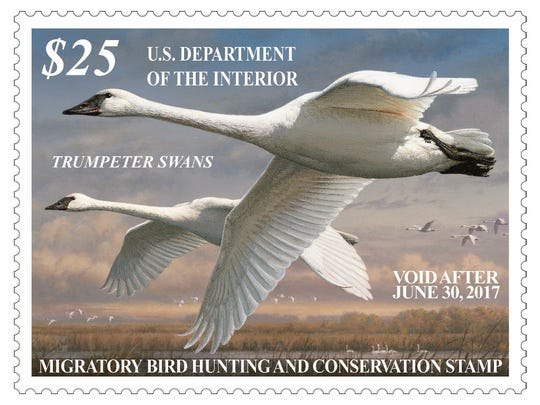 This is the current federal duck stamp. Proceeds from stamp sales are used to buy or lease wetlands and upland habitats for inclusion in the National Wildlife Refuge System.
