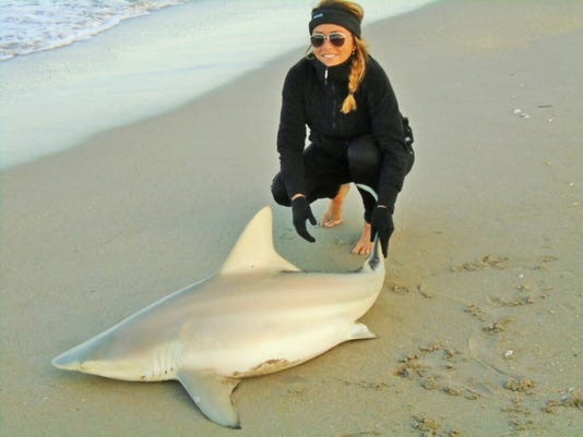 636224033578690110-shark-sharp.jpg