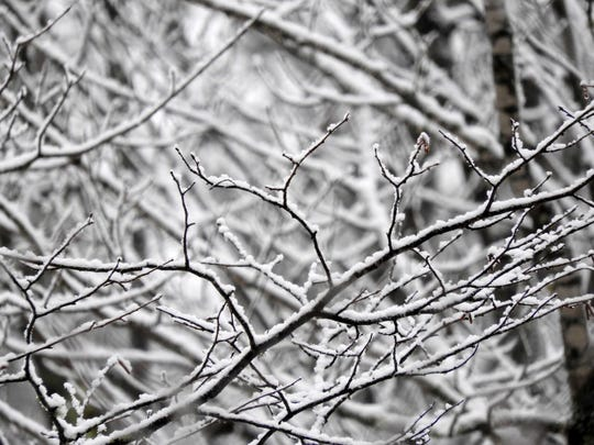 Bright snow on dark twigs creates a stunning pattern in the forest as they seem to reach out toward one another.