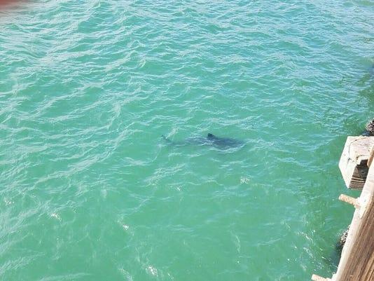 636328824292987088-SharkSight6.11.17.jpg