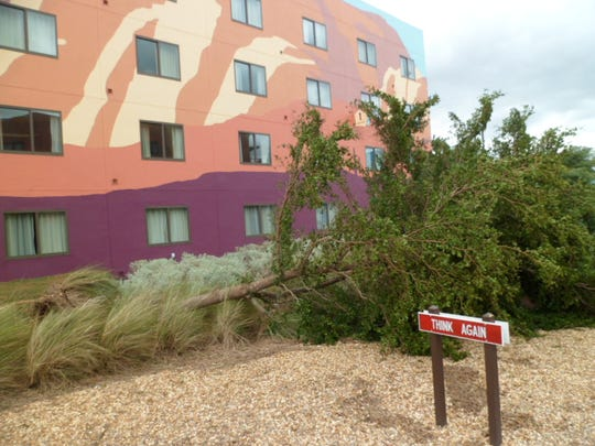 Elaine Gridley and her cat, Squeaky, evacuated here, to the Disney Animation Resort in Orlando, with family. She shared this photo of a tree that had fallen in front of the resort during Irma.