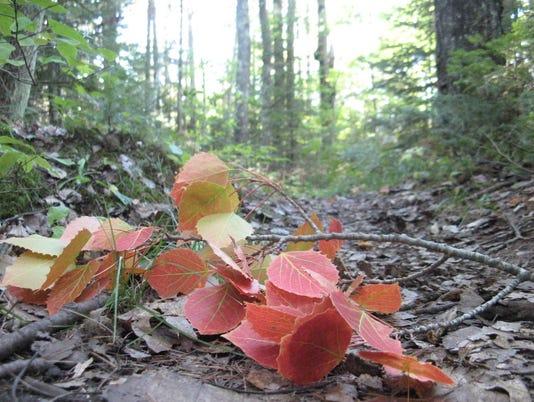 636433494167471620-aspen-leaves-on-trail-1024x768-.jpg