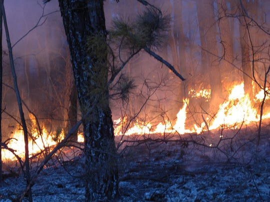 A fire burning in the Pinelands in 2012