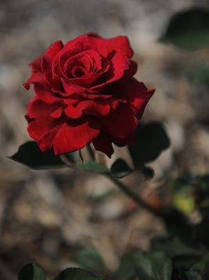The Richmond Rose Garden is one of 40 local nonprofits participating in the 2021 Challenge Match.