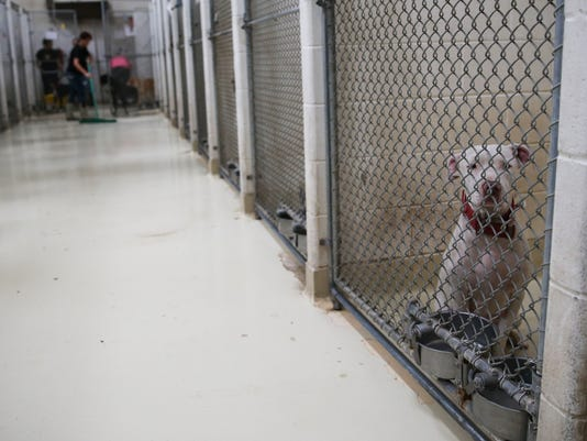 San Angelo Animal Shelter