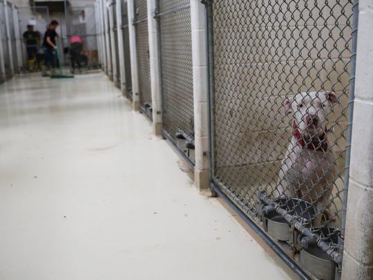 Shelter employees cleans kennels Oct. 19, 2016, at