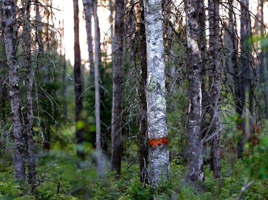 WIS Timber update July 7001.jpg