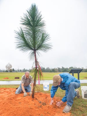 At left, Vernon Compton, with the Longleaf Alliance, and Randy Creel, a Bagdad Waterfronts Florida Partnership volunteer, pack the dirt around a newly planted Longleaf Pine tree on Dec. 5 in Bagdad Mill Site Park in Bagdad.