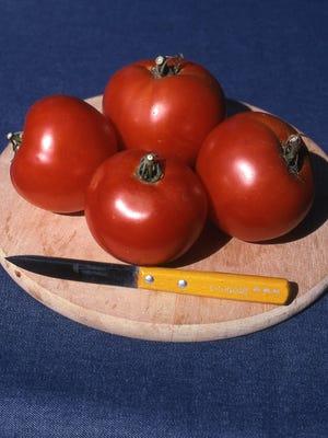 Many tomato breeders like California because the long growing season permits more than one generation of plants. Richard Poffenbaugh Photo.