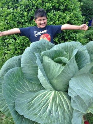 Charlie Hutts, a third-grader from Brandywine Springs Elementary, grew this giant cabbage.