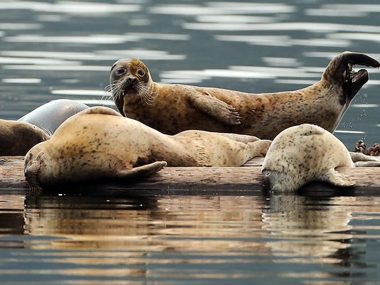 Seal-FILE-01.JPG