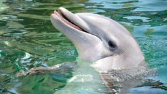 Alia, a 10-year-old bottlenose dolphin, died at Dolphinaris