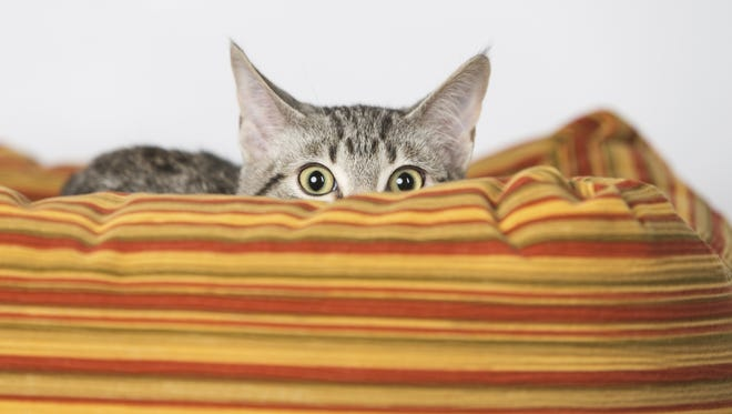 Investors can't be scaredy cats.
