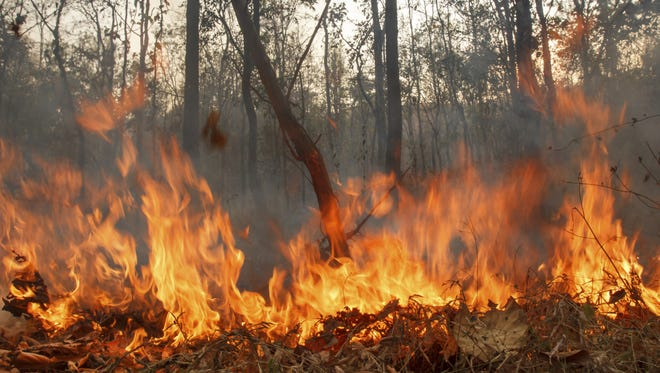 FILE: Prescribed burns will be taking place Monday in Collier County.