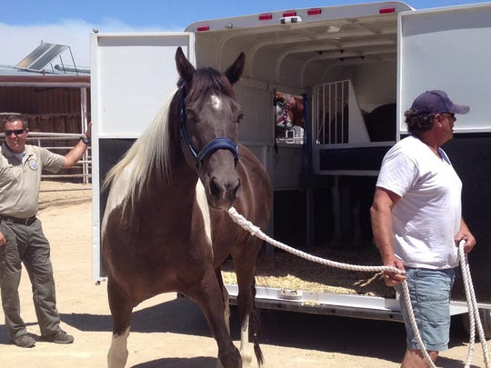 Stringbean is dropped off at the Yucca Valley Equestrian Center Thursday. At least 20 horses were left there while owners evacuate due to the Lake Fire.