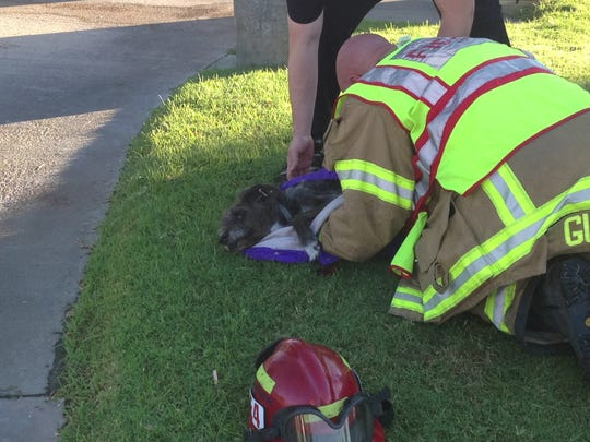 A dog was pulled from a car involved in a traffic collision Tuesday on East Palm Canyon Drive in Palm Springs. Neighbors took the dog to an animal hospital in Indio for treatment, firefighters said.