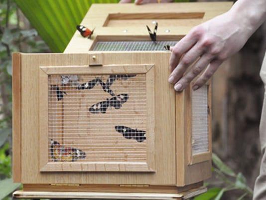 635919020331297389-butterflies-1456259162349-384913-ver1-0.jpg