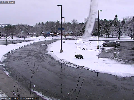 Aspirus Wausau Hospital caught this bear wandering