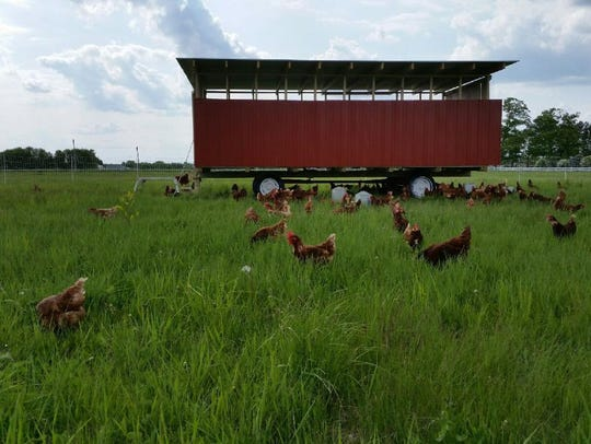 The Johnsons' chickens, like their other animals, are