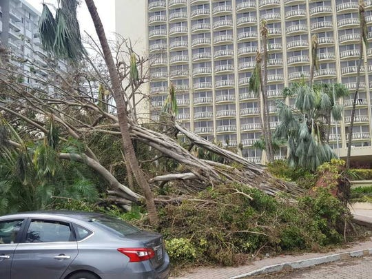 The scene in downtown Carolina, Puerto Rico. Felled trees were everywhere.