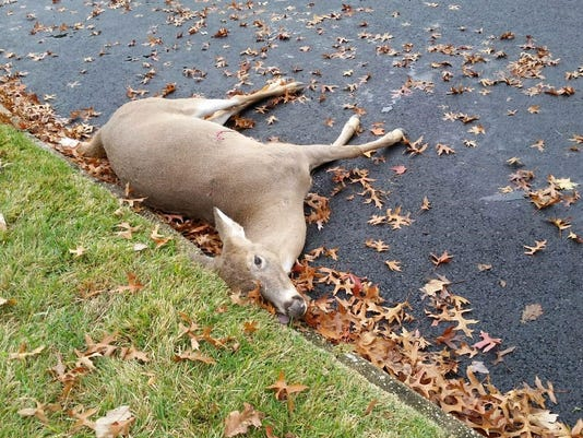636455691730946949-Dead-deer-in-Plainfield.jpg