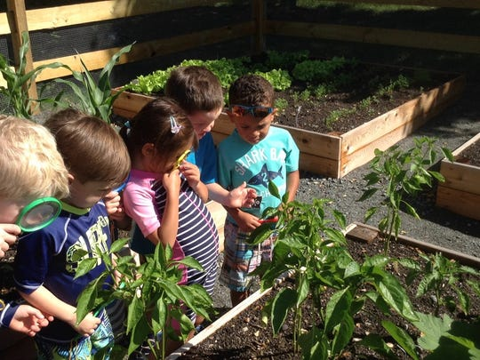 Pre-Kindergarten children observing vegetables in the garden.