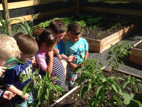 Pre-Kindergarten children observing vegetables in the