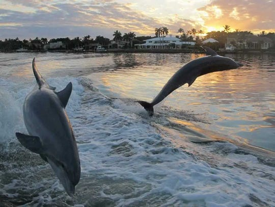 Dolphin cruises are a popular, family-friendly way