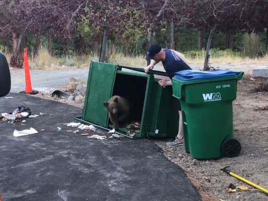 VIDEO THUMBNAIL - Baby bears don't belong in trash cans!