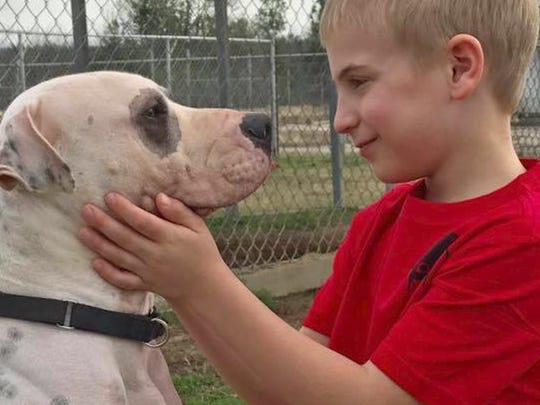 Roman and his parents never wanted to go to the kill shelter because it made them too sad. But the second they walked in the door, this little boy's life and the lives of thousands of dogs instantly got better.
