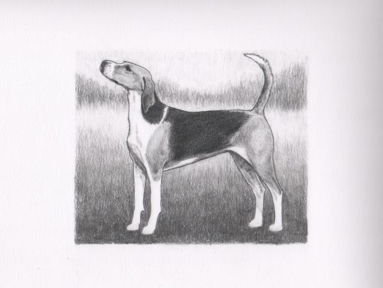 """American Foxhound"" is one of the drawings by local"