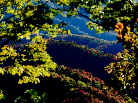 A vista of trees changing color in Great Smoky Mountain
