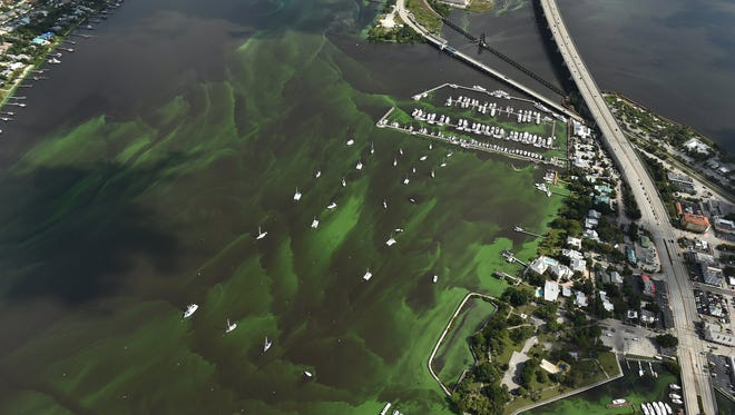 Drifts of algae blooms are seen June 24, 2016, filling the St. Lucie River along side U.S. 1 at the Roosevelt Bridge (right) between Palm City (left) and Stuart in Martin County.