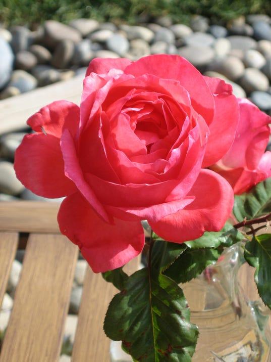 -rose.jpg_20141230.jpg