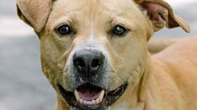 Rocky is an energetic pup with a great smile, who needs a home.