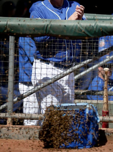 After bees attacked the Royals during a Cactus League