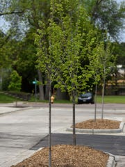 New trees have been planted around DakotAbilities at