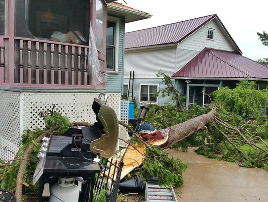 A tree fell and almost landed on Jane Newton's Brandon