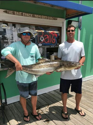Dave Shettel, left, and Mike Farrow with a stud cobia that weighed 54 pounds. The story is the crew was fishing for snapper 26 miles offshore when a 10- to 12-foot great white shark swam by the boat with four cobia on her back. The big one hit the bait.