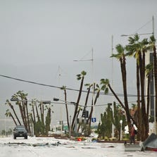Damaged trees line the main road leading to Cabo San Lucas.