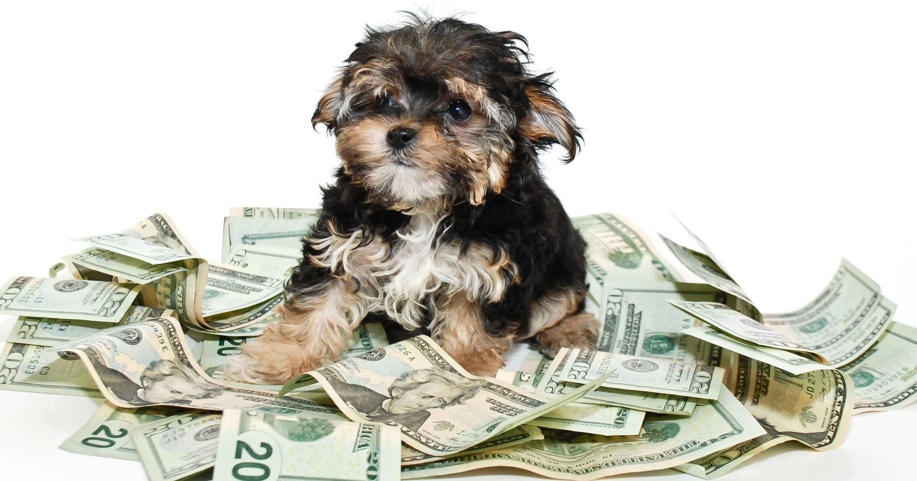 This is how much it really costs to own a dog per year