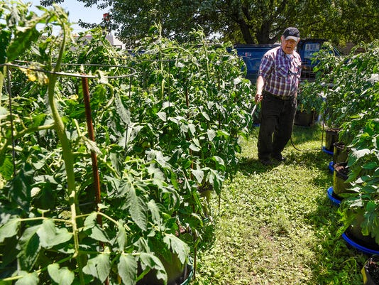 Backyard Cash Crops tomato whisperer' grows happiness, hope in backyard