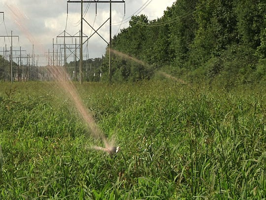 In this June 30, 2017 frame from video jets of liquified hog waste shoot from spray guns and onto a field near Wallace, N.C.  federal lawsuit starting in April 2018, in the country's No. 2 pork-producing state is the first of a string of cases deciding whether open-air animal waste pits are such a nuisance that neighbors can't enjoy their own property.  The North Carolina trial's outcome could shake the profits and change production methods of pork producers who have enjoyed legislative protection and promotion in one of the nation's food centers.