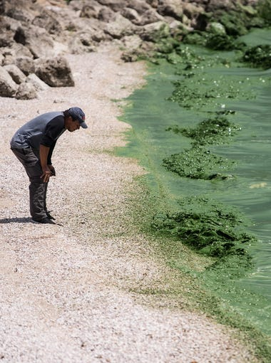 """Otto Herrera, of Royal Palm Beach, takes a closer look at the algae from shore at Lake Okeechobee on Friday, June 29, 2018, at Port Mayaca. Herrera, who said he has lived in Florida since he was 12-years-old and had never seen the lake, was traveling from Bradenton with a friend who suggested the detour. """"I'm surprised about the green stuff,"""" Herrera said. """"I was hoping to see a beautiful lake, but the green … it was kind of disappointing, you know."""" Discharges from the lake to the St. Lucie River were starting to be reduced Friday, with a complete stop for nine consecutive days then resuming in pulses indefinitely, according to the Army Corps of Engineers."""