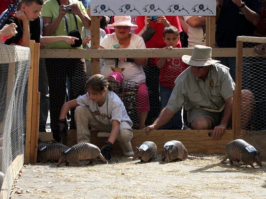 LaBelle's annual Swamp Cabbage Festival is Feb. 23-24. One of the most unique events: armadillo races. Here, armadillos race in 2009.